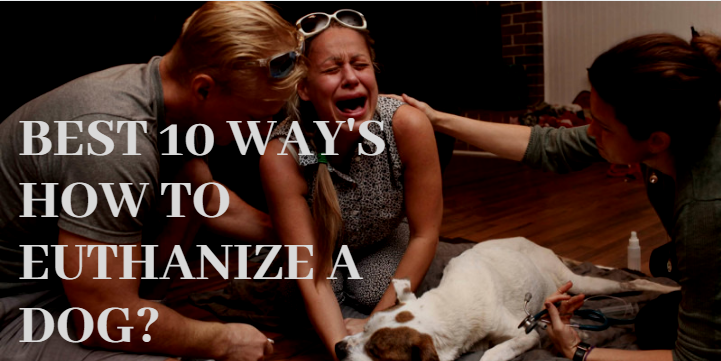 Best 10 Way's How to euthanize a dog? - Zoological World