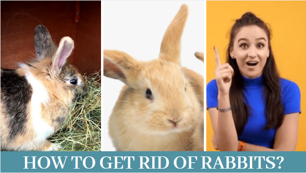 Best 5 Ways, How to get rid of rabbits? - Zoological World