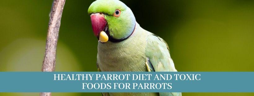 Best 15 Parrots Foods What Do Parrots Eat Zoological World