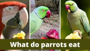 Best 10 New Zealand Species New Zealand Parrots Zoological World